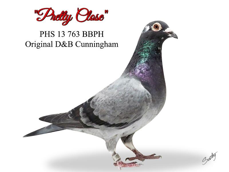 index pigeon sales